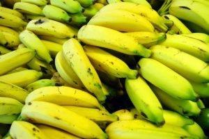 Nuestros grandes aliados, los plátanos